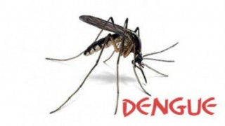 Dengue menace: 2 more deaths; total cases rise to 311 in Delhi